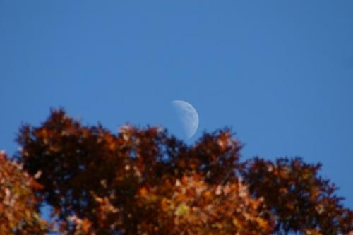 20121023-010841.jpg